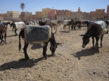 marokko_068