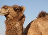 marokko_070