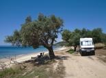 Am Strand mit schattigem Olivenbaum (Kalkidiki Griechenland)