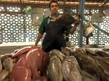 Fischmarkt in Bandar Abbas
