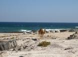 Strand-Kamel