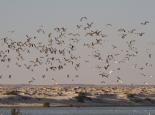 viele Vögel an der 3Palmen-Lagune