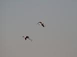 Flamingos an der 3Palmen-Lagune
