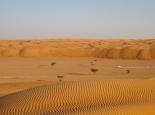 Wüstencamp in den Wahiba Sands
