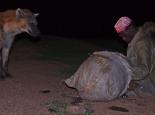 Die Besonderheit von Harar: Hyänenfütterung