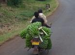 Haupttransportmittel: das Moped