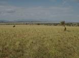 Blick zurück auf das Narus Valley