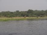 viele Tiere am nördlichen Flussufer