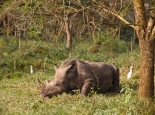 ... im Ziwa Rhino Resort