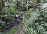 auf kleinen Wegen durch den Wald