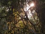 Dschungelansichten am Morgen