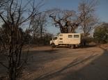 Morgenstimmung mit Baobab