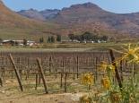 Weinbau in den Cederbergen