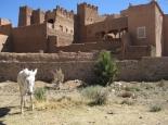 marokko_054