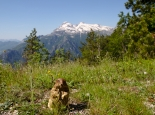 Mankei in den albanischen Alpen