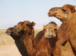 in der Wüste bei Marenjab