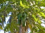 tropische Gärten in Salalah