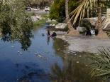 die Omanis lieben das Wasser