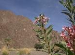 Wanderung im Wadi Al Adyad