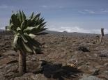 die karge Landschaft des Sanetti-Plateaus