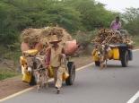 auf dem Weg zum Markt