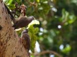 Vögel in Kims Camp