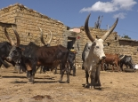Viehmarkt in Adigrat