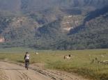 ein einmaliges Erlebnis: radeln unter Zebras ...