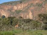 ... und Giraffen