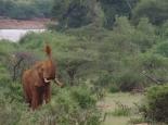 dieser Elefant ist nicht ganz so gut aufgelegt