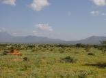 grünes Afrika