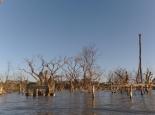abgestorbene Bäume am Seeufer
