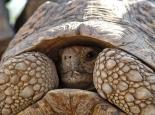 skeptischelSchildkröte