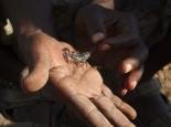 noch ein Skorpion