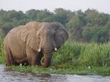 ... mit Elefant ...