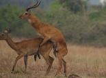 wir sorgen für Antilopennachwuchs