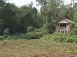 der Silberrücken zwischen Haus und Teeplantage