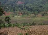 Reisanbau in Tansania