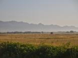 Blick in die Serengeti von der Straße
