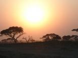 Morgenstimmung im Amboseli NP