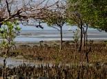 Mangroven am Peponi Beach