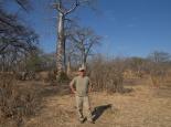 Baobabs am Fluss