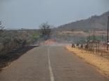 der Straßenrand wird abgebrannt