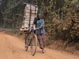 Holztransport mit dem Fahrrad ...
