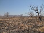 trockene, trostlose Landschaft im North Luangwa