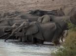 viele Elefanten ...