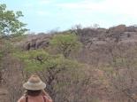 Blick vom Camp auf das Löwenrudel