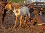 Ziegen melken und füttern ist Mädchensache