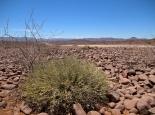 Landschaft bei Palmwag