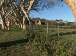 Farm in Swasiland
